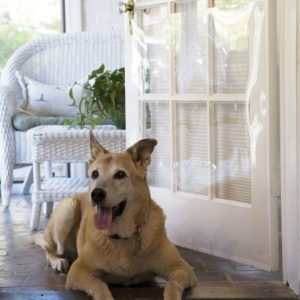 The Door Shield - Protection Against Pet Scratches