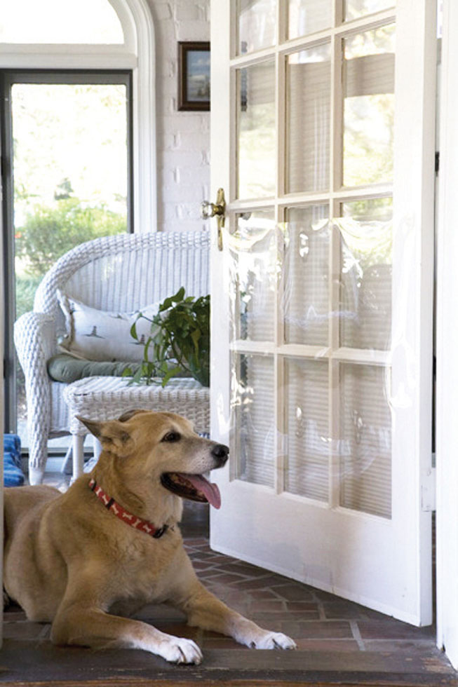 The Door Shield Prevent Pet Scratches Pet Products Cardinal Gates